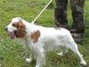Житель Автозаводского района предстанет перед судом за убийство собаки на глазах у ее хозяйки