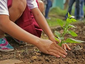 Нижегородцам предлагают посадить деревья в память об участниках Великой Отечественной войны